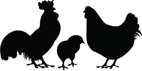 chicken silhouette: Hen .