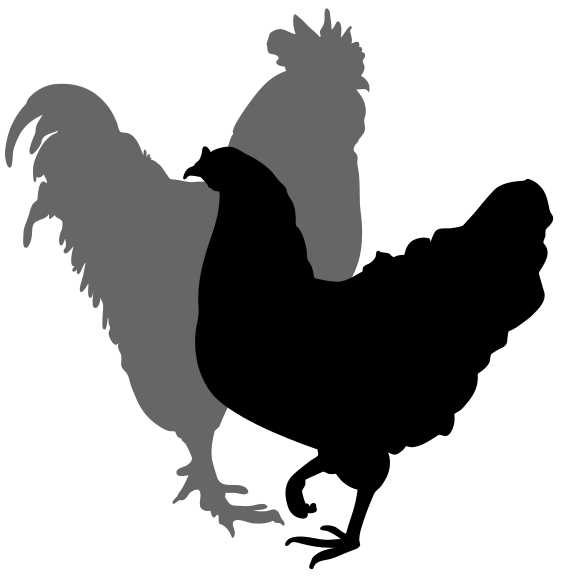 Chicken Silhouette Clipart Best