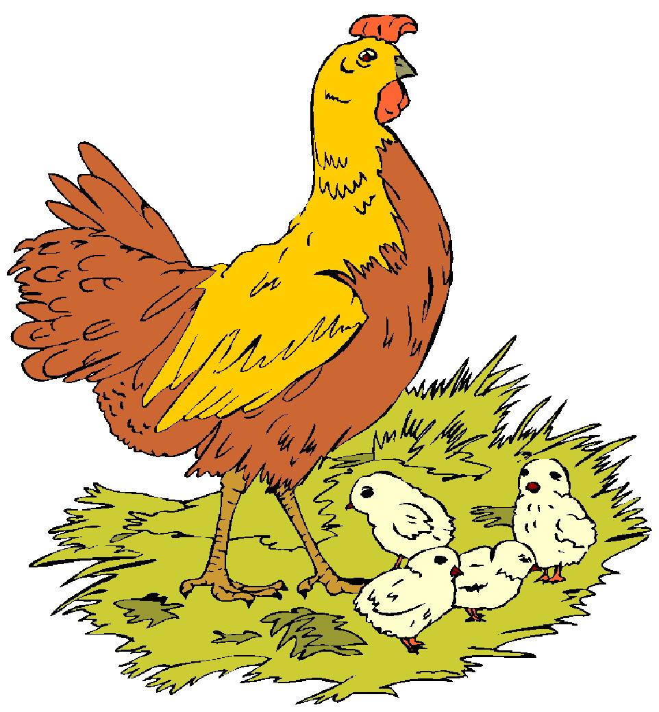 Chickens Clip Art-Chickens clip art-11