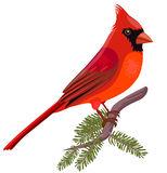 Christmas Cardinals Clipart.103 Cardinal Clip Art Clipartlook