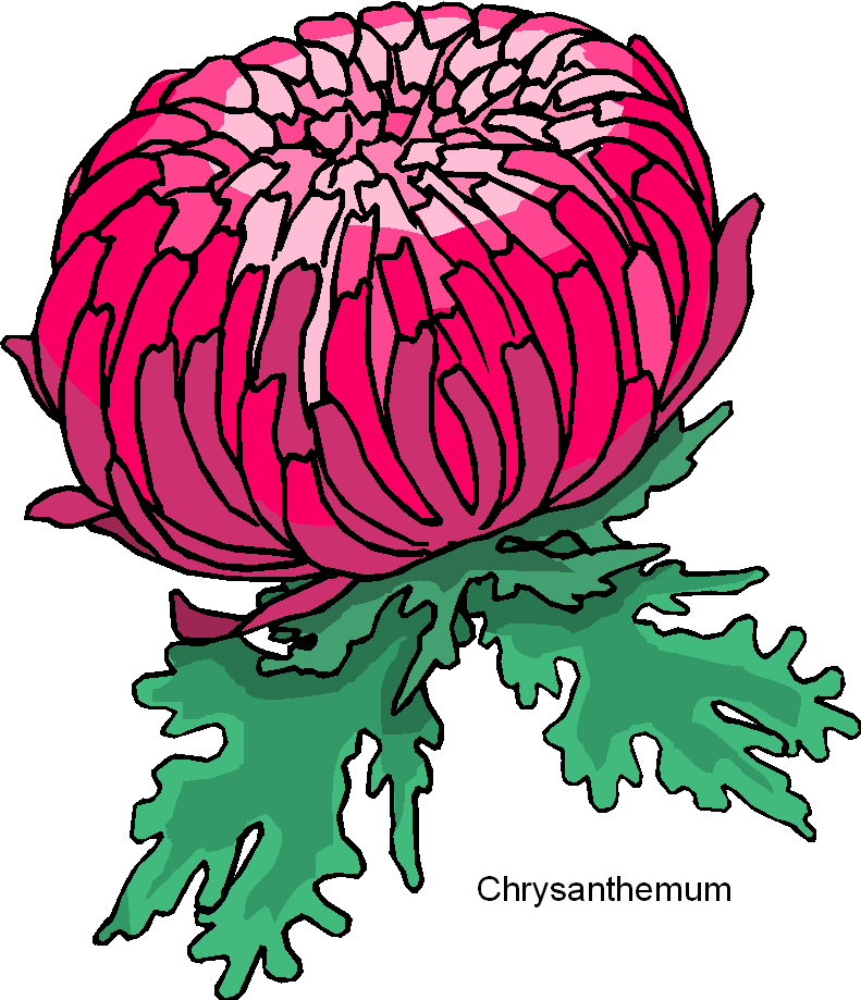 Chrysanthemum Flower Free Cli - Chrysanthemum Clip Art