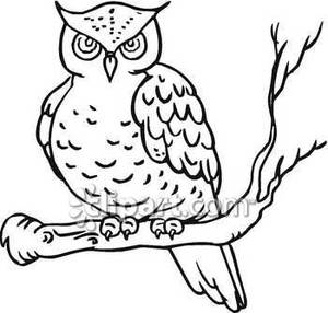 Classic Black And White Owl ..-Classic Black and White Owl ..-5