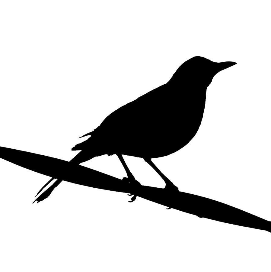 ... Clip Art Blackbird - ClipArt Best ...