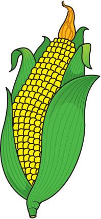 Clip Art Corn Clipart corn clipart free download clip art on clipart