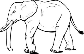 Clip Art Elephant   Clip Art, .-Clip Art Elephant   clip art, .-0