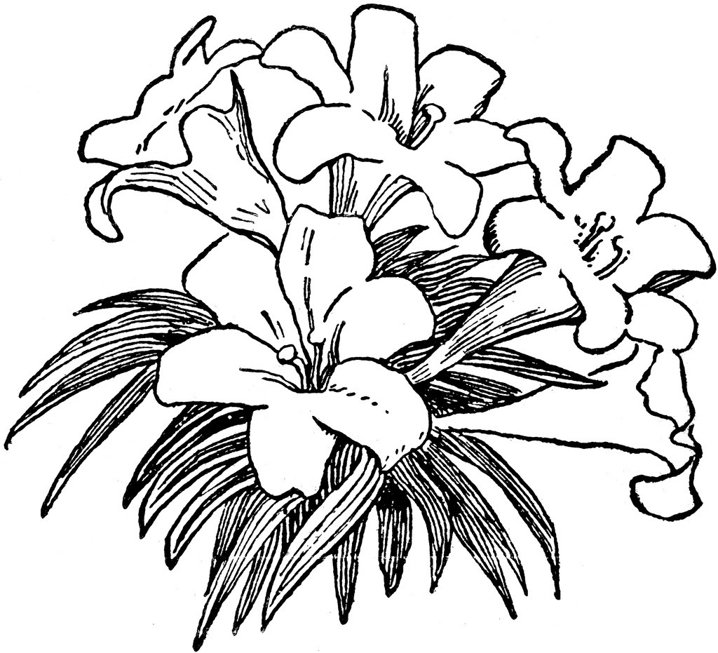 Clip Art Flowers Black and .
