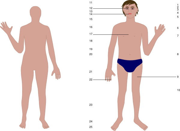 Clip Art: Human Body: Front . Download this image as: