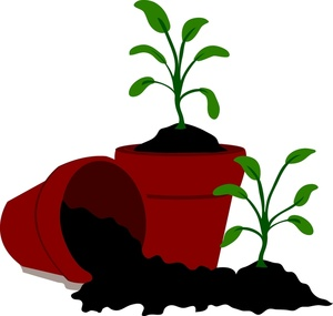 Clip Art Images Seedling Stock Photos Clipart Seedling Pictures