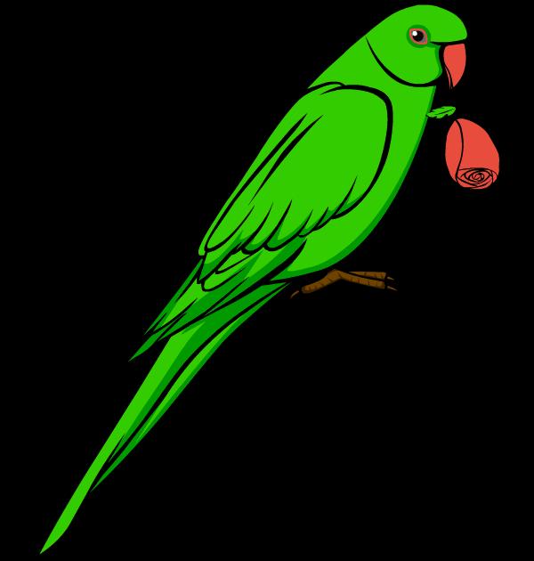 clip art love bird parrot .