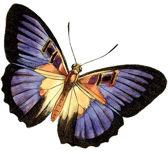Clip Art Of Butterflies - Clipart library