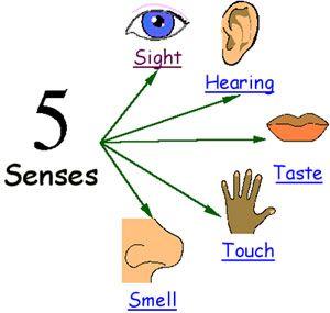clip art of the 5 senses