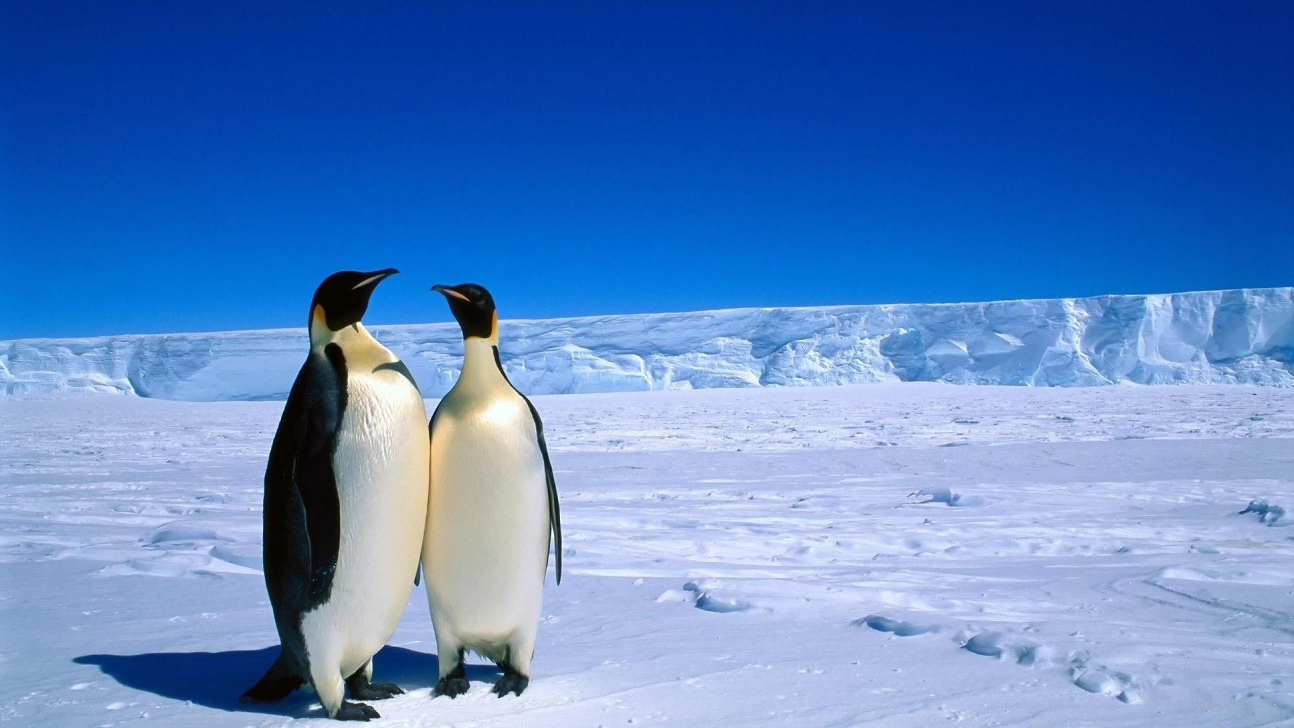 Clip Art Penguins in Antarctica
