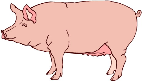 Clip Art Pigs 703071 Jpg