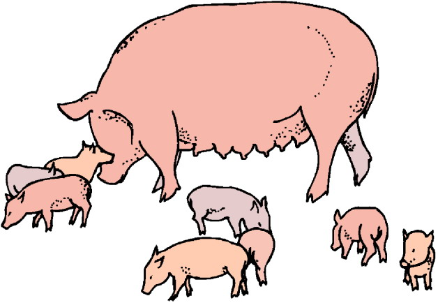 Pigs Clipart