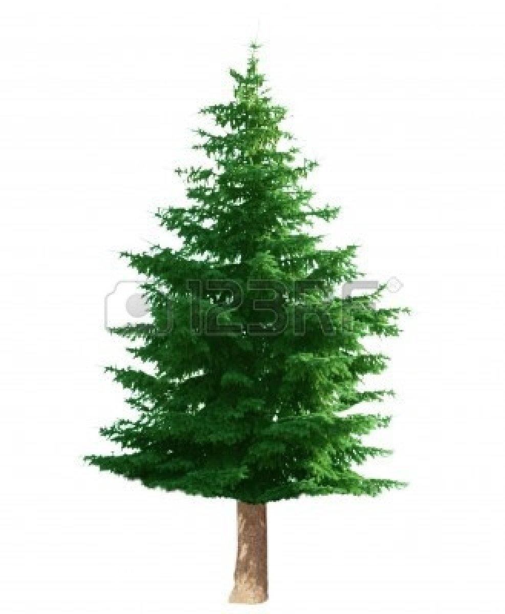 Clip Art Pine Tree Free Pine Pine Tree C-Clip Art Pine Tree Free Pine Pine Tree Clipart-0