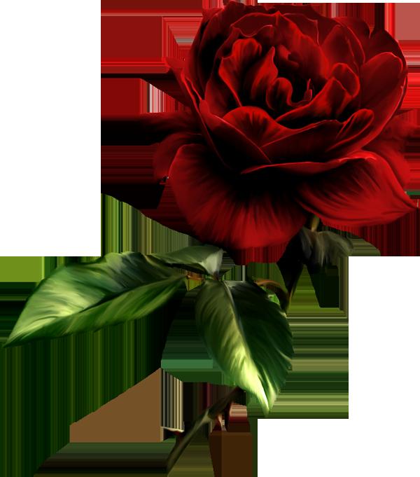 Clip Art Red Rose-Clip Art Red Rose-1