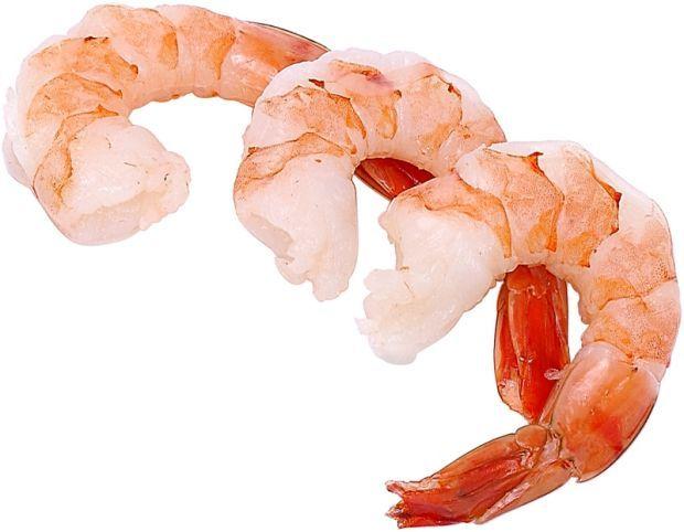 Clip Art Shrimp-Clip art shrimp-2
