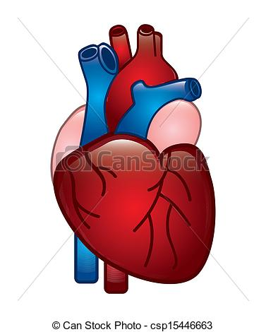 Clip Art Vector Of Human Heart Design Over White Background Vector