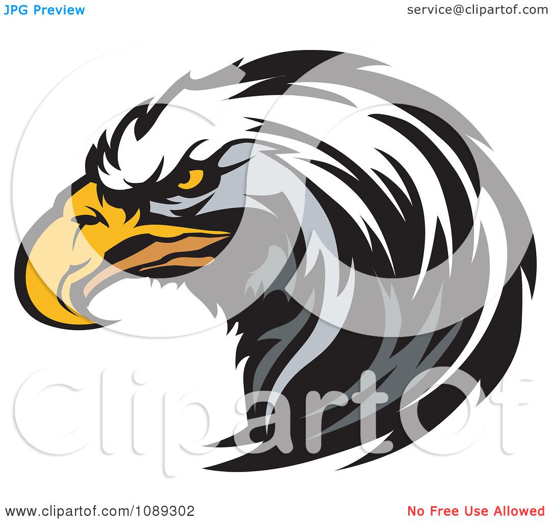 Clipart Bald Eagle Mascot Head Focused --Clipart Bald Eagle Mascot Head Focused - Royalty Free Vector Illustration by Chromaco-4
