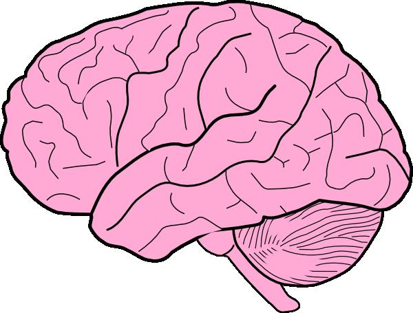 clipart brain