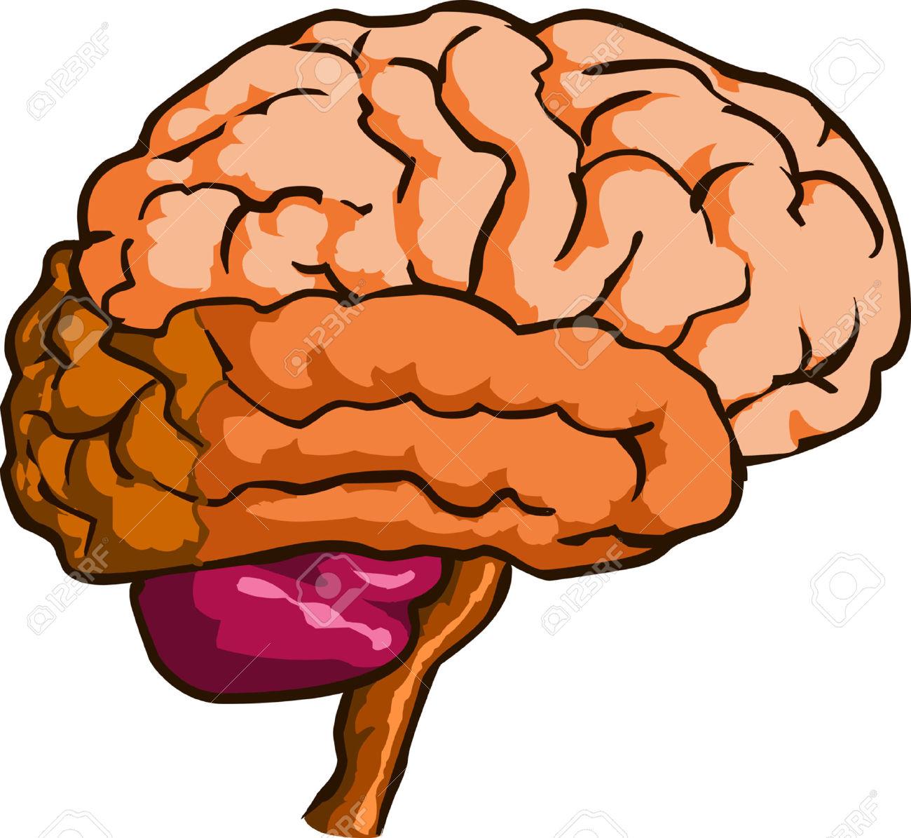 clipart brain - Clipart Of Brain