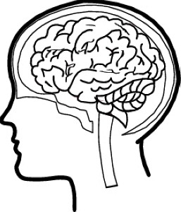 Clipart brain transparent danasria top