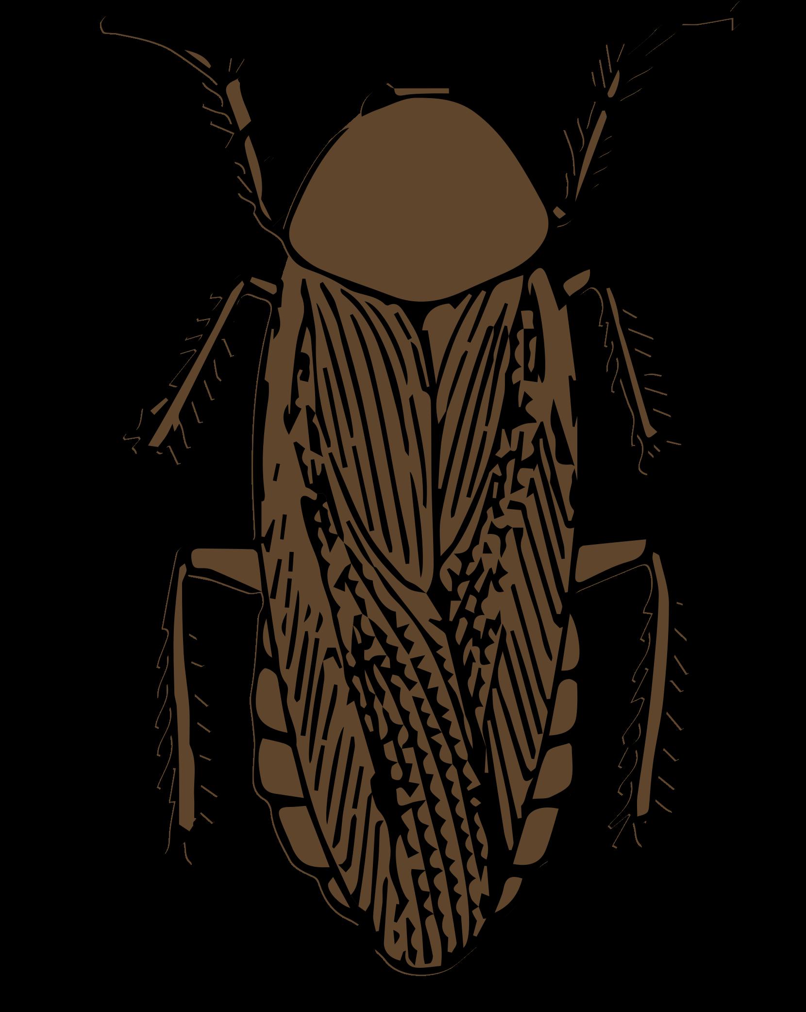 Clipart cockroach color