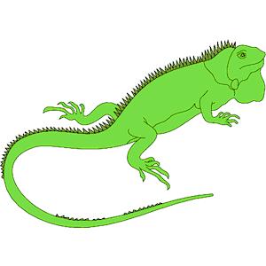 clipart iguana
