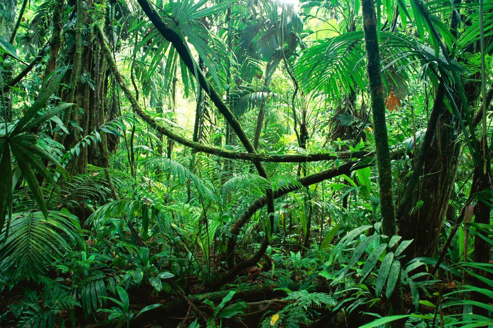 Clipart Jungle