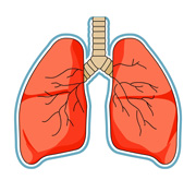 clipart lungs-clipart lungs-6
