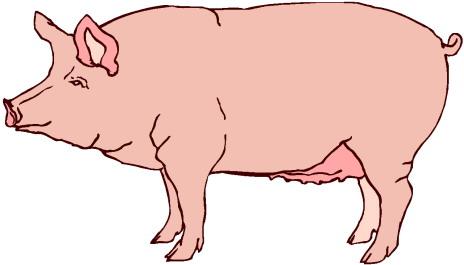clipart pig-clipart pig-8
