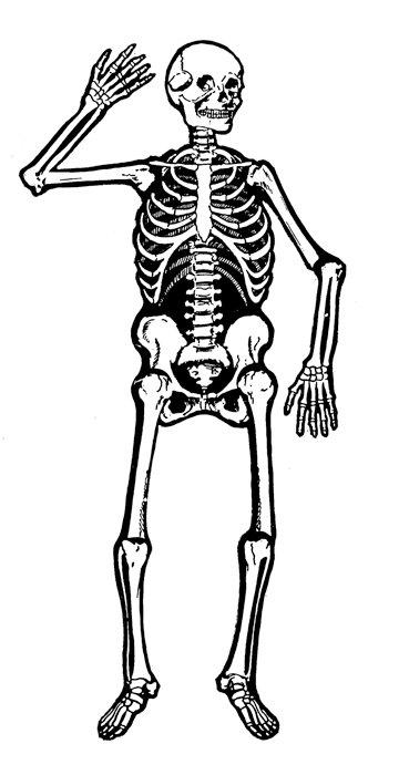 Clipart skeleton