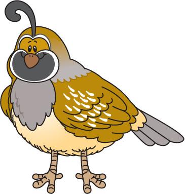 cliparti quail clipart id- .