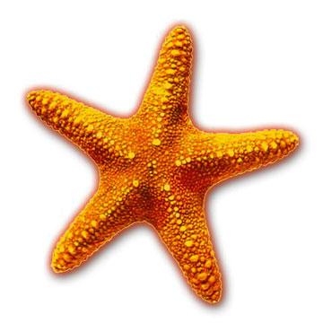Cliparti1 starfish clip art