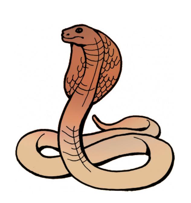 Cobra Clip Art-Cobra Clip Art-5