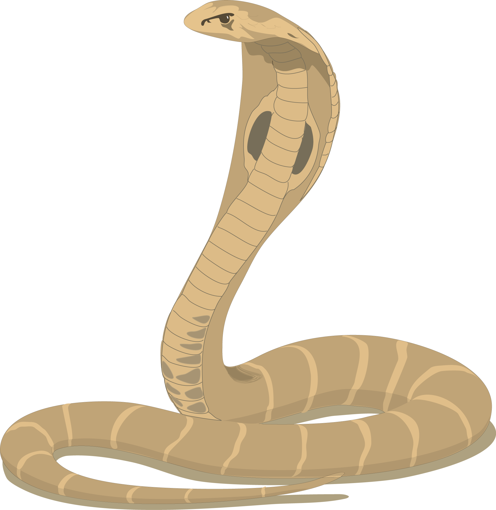 Cobra Clip Art Free. Cobra Snake Cartoon-Cobra Clip Art Free. Cobra Snake Cartoon-7