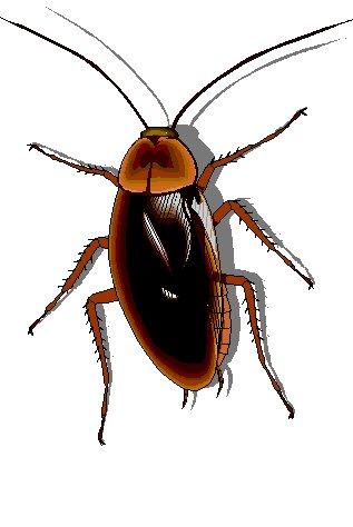 ... Cockroach Clipart ...