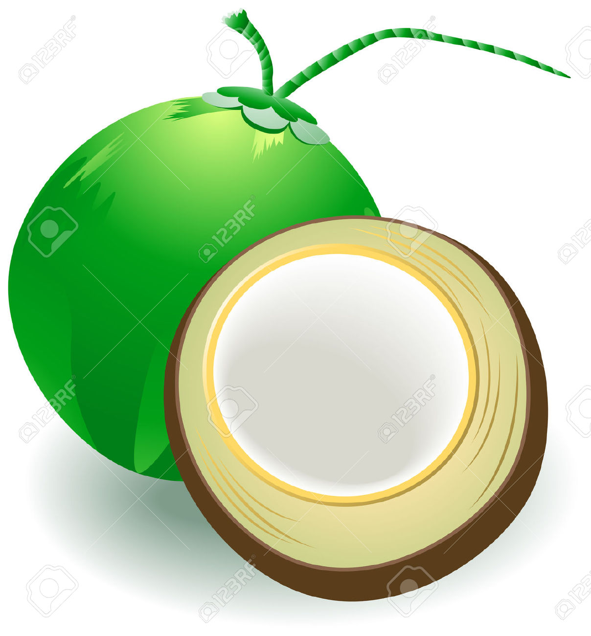 Coconut Bra Clip Art. Coconuts Illustrat-Coconut Bra Clip Art. Coconuts Illustration with .-3