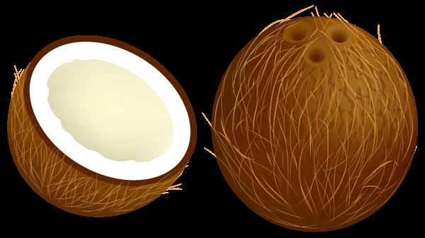 Coconut clipart 1 Coconut clipart 2-Coconut clipart 1 Coconut clipart 2-2