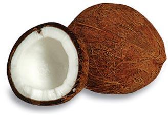 ... Coconut clipart-... Coconut clipart-9