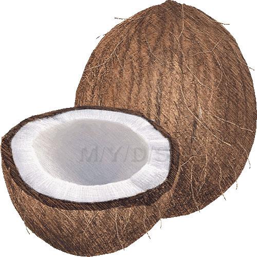 Coconut Clipart Free Clip Art-Coconut Clipart Free Clip Art-16