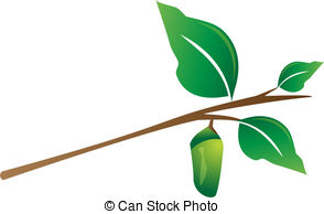 ... Cocoon Hanging From Tree Branch - In-... Cocoon hanging from tree branch - Insect cocoon hanging from.-9