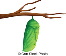 Cocoon Illustrations And Clip Art. 307 C-Cocoon Illustrations and Clip Art. 307 Cocoon royalty free illustrations and drawings available to search from thousands of stock vector EPS clipart graphic ...-11