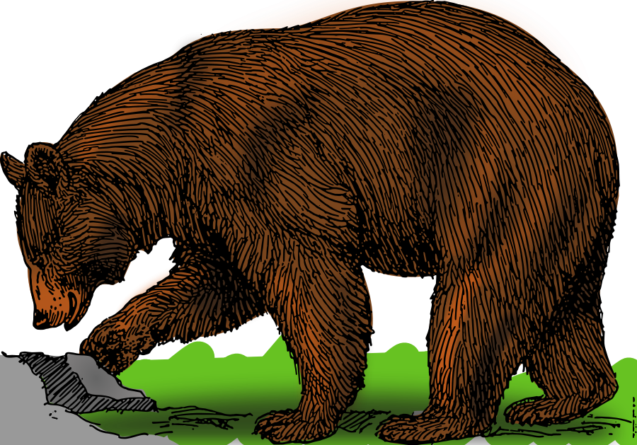 Colored Bear Clipart image