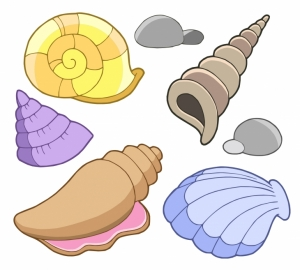 Colorful Seashell Clipart .
