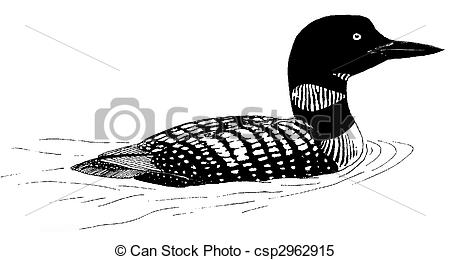 Common Loon - Gavia Immer-Common Loon - Gavia immer-3