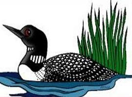 Common Loon-Common Loon-5