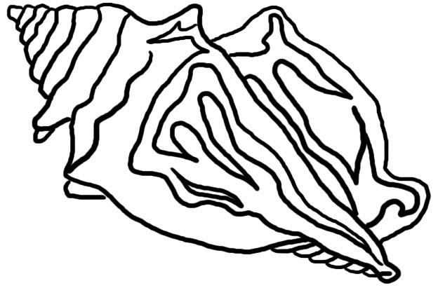 Conch Shell Line Drawing Images Pictures - Becuo