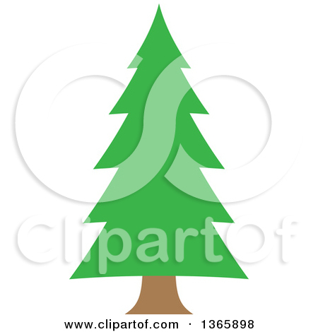 Conifer Evergreen Tree