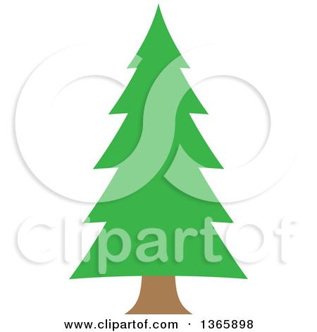 Conifer Evergreen Tree-Conifer Evergreen Tree-11